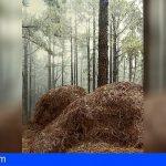 La Memoria del bosque llega a Guía de Isora