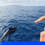 El Cabildo de Tenerife pide que se limiten las licencias para la observación de cetáceos