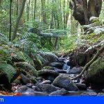 El Pleno de La Gomera aprueba solicitar al Gobierno la gestión directa del Parque Nacional de Garajonay