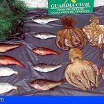 La Guardia Civil incauta en Candelaria más de 15 Kg de pesca capturada de forma ilegal
