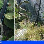 La Gomera | Nuevo sabotaje en el suministro de agua potable entre el Centro de Salud y El Caidero