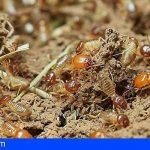 Tenerife | Los ayuntamientos se informan sobre el protocolo de actuación y el tratamiento de las termitas