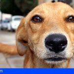 El Veterinario: en primera línea frente al maltrato animal