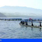 Canarias otorga 8 millones para compensar sobrecostes en el sector pesquero