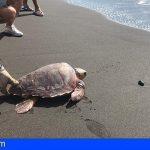 Escolares gomeros devuelven al mar una tortuga boba en Playa de La Cueva
