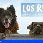 Filmoteca Canaria trae la singular historia de una pareja de perros que vive en un skatepark
