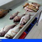 Incautados 20 kilos a un pescador furtivo en Fuerteventura