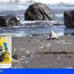 Loro Parque analiza 28 playas canarias y extrae más de 4.400 objetos de plásticos