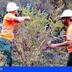 Tenerife retira 40 toneladas de flora exótica invasora en el mes de junio