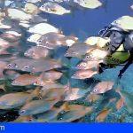 La Gomera organiza su primer concurso de fotografía submarina