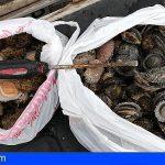 El Hierro   Inspectores canarios incautan 7,7 kilos de lapas en Las Barranqueras