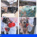 Algunos de los 76 perros rescatados en Adeje tenían dueños y les serán devueltos