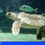 Una tortuga marina lesión medular irreversible encuentra un hogar en Loro Parque