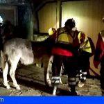 Logran salvar de las llamas in extremis a la famosa burra del parador de Tejeda