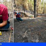 Una brigada que está a la cabeza del país investiga los incendios forestales de Gran Canaria
