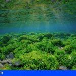 Canarias reúne las condiciones idóneas para explotar la biotecnología de algas