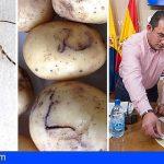 Retiran en Gran Canaria más de 100.000 kilos de papas afectadas por la polilla guatemalteca