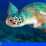 `Son Atlántico´ promocionará a nivel mundial los fondos marinos de Arona