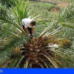 Miel de palma, el dulce manjar de La Gomera