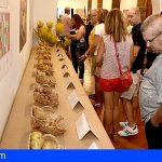 La Feria de la Papa de Gran Canaria da a conocer las 31 variedades que se cultivan en la Isla