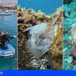 La ONG Innoceana estudia los fondos marinos de Guía de Isora