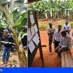 ASPROCAN conoce de cerca la producción de banana en África
