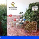 Incautan 22 kilos de marihuana en dos plantaciones en La Palma