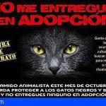 Prohíben las adopciones de gatos por Halloween