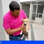 CC Adeje propone la creación de un parque para personas y mascotas