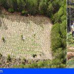 Encuentran 3 plantaciones de marihuana en el Parque Natural Serranía de Cuenca