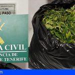 Investigan en La Palma a un hombre de 53 años por cultivar marihuana en su casa
