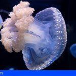 Loro Parque exhibe 9 especies diferentes de medusas autorreproducidas por primera vez en España