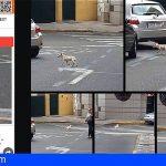 Las Palmas   Un perrito corre peligro y trae de cabeza a los vecinos de Telde