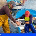 La Palma | La Cofradía de Las Nieves lanza su pescadería online 'El Muellito'
