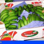 ¿Hay futuro para el plátano europeo?