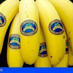 Plátano de Canarias tendrá nuevo etiquetado 100% compostable y biodegradable