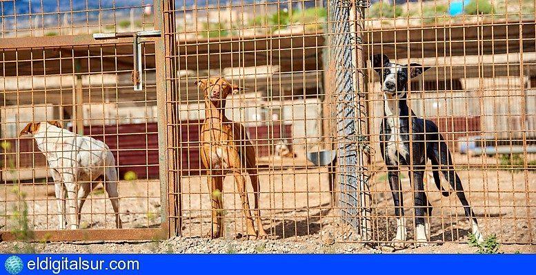 Cc Pnc Tenerife Solicita Se Agilicen Los Trámites Para La Red De Albergues De Animales Eldigitalsur