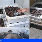 Retiran en Santa Cruz 80 kilos de lapas que eran transportadas sin refrigerar