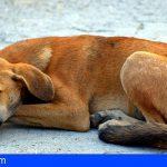 Granadilla   BUGA denuncia el incumplimiento de la Ley de Protección Animal