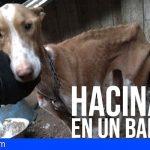 Animales encerrados en pésimas condiciones en los barrancos de Bollullos y Martiánez