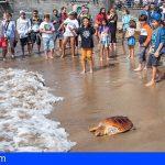 Devuelven dos tortugas al mar en Las Canteras tras curarlas en su Centro de Recuperación