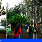 El Catálogo de Árboles Singulares de Gran Canaria será uno de los más biodiversos de España