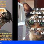 Leales.org: «El Gobierno de Canarias abandona a sus animales»