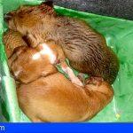 Hallan en Gran Canaria 6 cachorros de perros en un contenedor de basura, 3 muertos y 3 graves