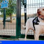 San Miguel ha sancionado 28 faltas por no cumplir con la Ordenanza Municipal de tenencia de animales