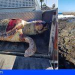 Arona | Una tortuga boba de casi 90 kilogramos aparece muerta en El Palmar