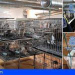 Rescatan en Madrid a 270 perros de 2 criaderos ilegales de chihuahuas