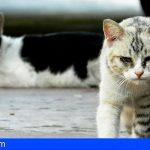 Leales.org: «Masacre felina impune por parte del Cabildo de Gran Canaria»