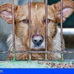 Mató a patadas a su perro en Gran Canaria por hacer sus necesidades en casa