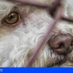 Gran Canaria | Ayuntamientos se desbordan de animales abandonados ante el cierre de Bañaderos